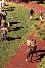 Keeneland walking ring in Lexington, Kentucky